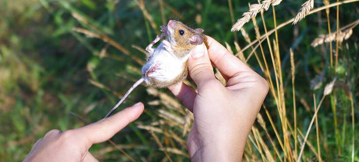 Find out how populations of small mammals are faring.
